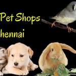 Top 10 Pet Shops in Chennai